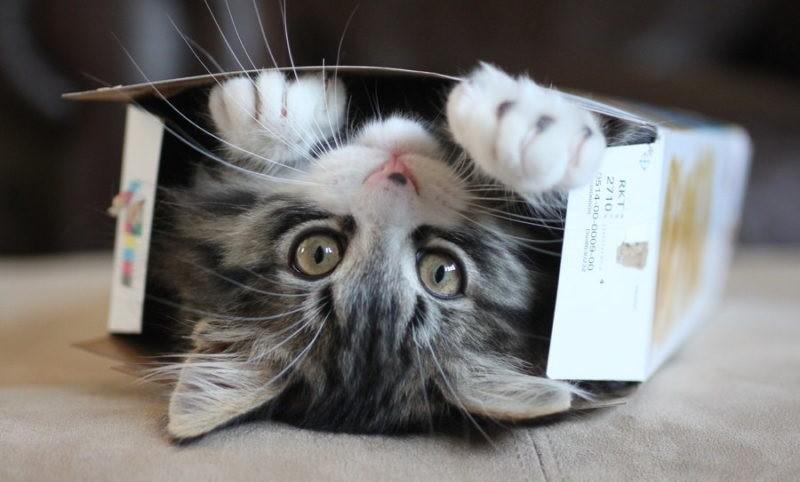 Γιατί οι γάτες  θέλουν να μπαίνουν στα κουτιά; (βίντεο)