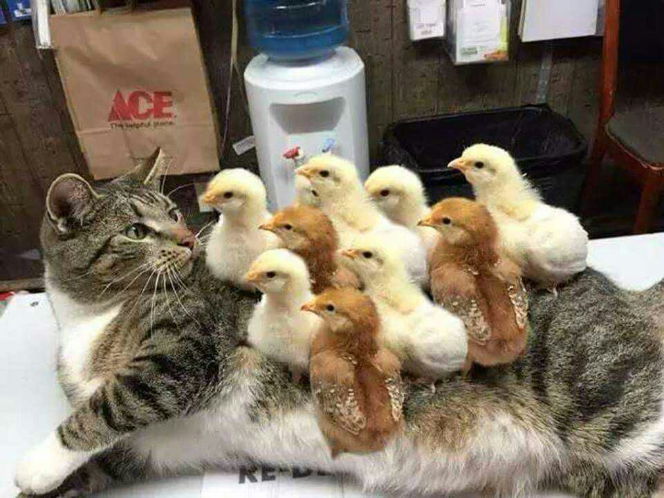 Funny animals of the week - 2 December 2016, best funny animals, cute animal photos