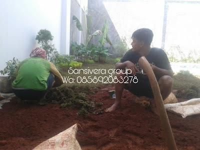 Project Penanaman Rumput