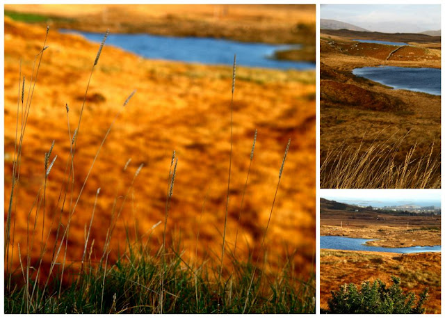 Golden grasses collage © Annie Japaud Photography, Connemara, Ireland