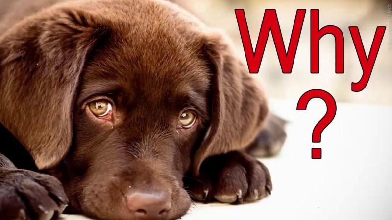 10 βίντεο και αληθινές ιστορίες με σκύλους που δεν θα αφήσει κανέναν ασυγκίνητο....(βίντεο)