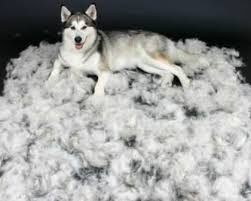 image of a husky surrounded by a gigantic pile of fur