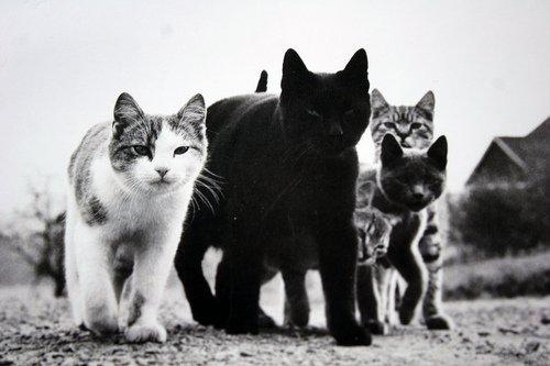 The Cat Ladies 169 Walter Chandoha