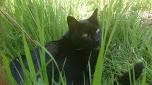 gata negra en la hierva