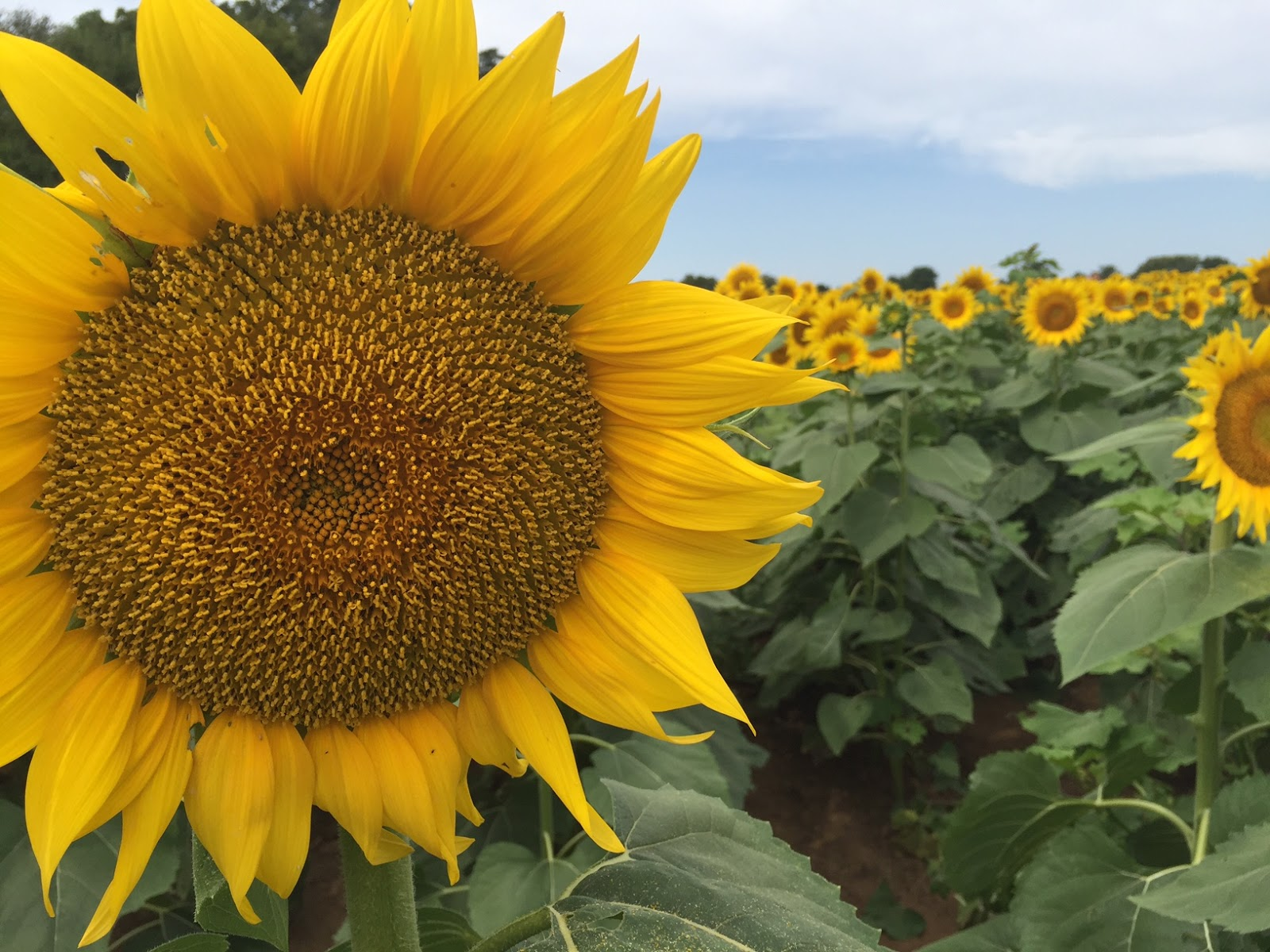 Keeping Up With The Souths The Sunflower State