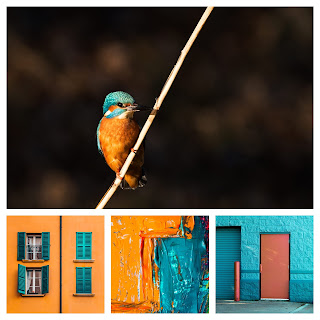 kingfisher-colours