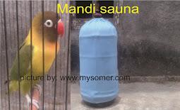 Fakta di balik lovebird mandi sauna