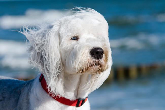 Pies i burza