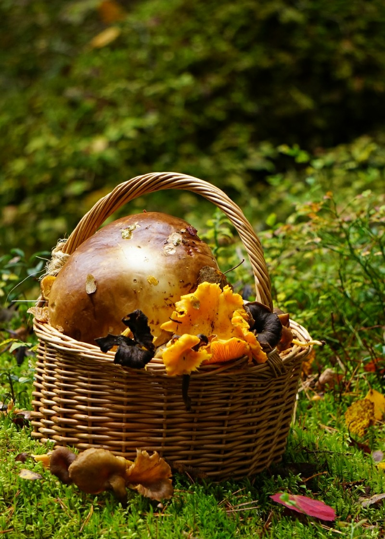 Sieniretki, tatti, lokakuu