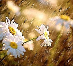http://amajeto.com/games/spring_rain/
