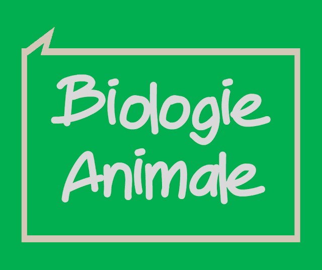 Cours Physiologie Animale - Synapse