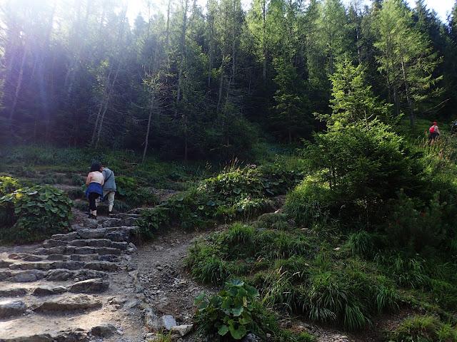 Szlak w pewnym momencie ostro skręca w prawo i wchodzimy w las