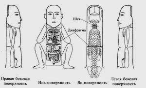 система наскомого применительно к пальцам человека