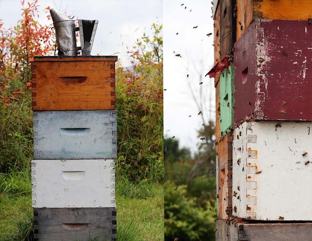 abeilles,mielsdanicet,fermeneuve,emmanuellericardphoto,hauteslaurentides,photo,emmanuellericardblog,emmanuellericardphoto