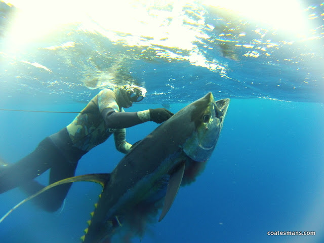 Tuna Paul Shannon ASI Spearfishing