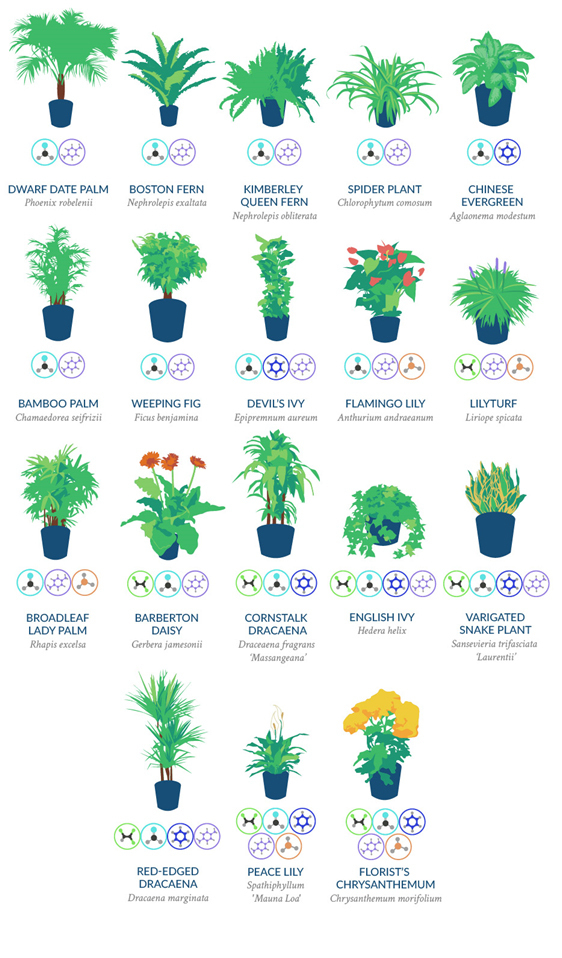 18 for Best air filtering houseplants