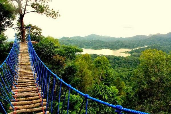 jembatan kayu kalibiru