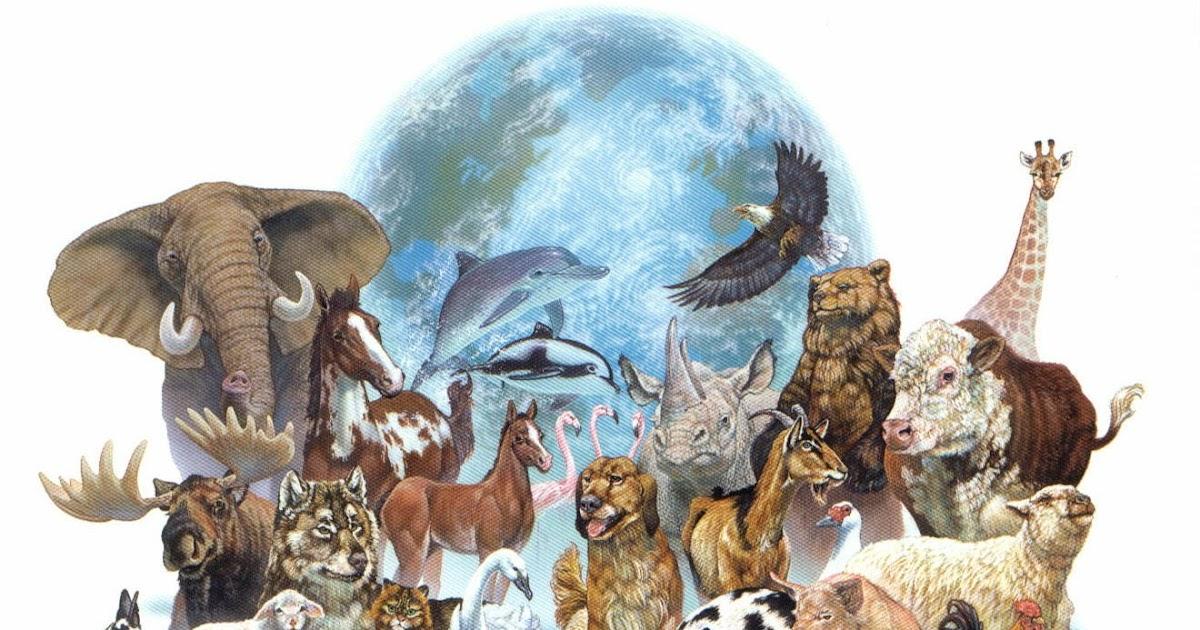 Fondos Animados Para Celular De Animales: Patada De Caballo: Animales Fondos