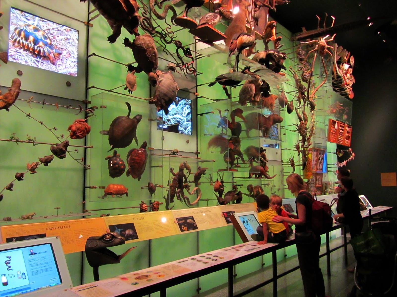 Visitar o MUSEU DE HISTÓRIA NACIONAL de Nova Iorque | EUA