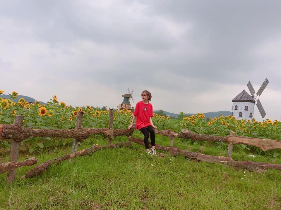 Giới trẻ 'phát sốt'' với vườn hoa hướng dương tại Bắc Giang -8