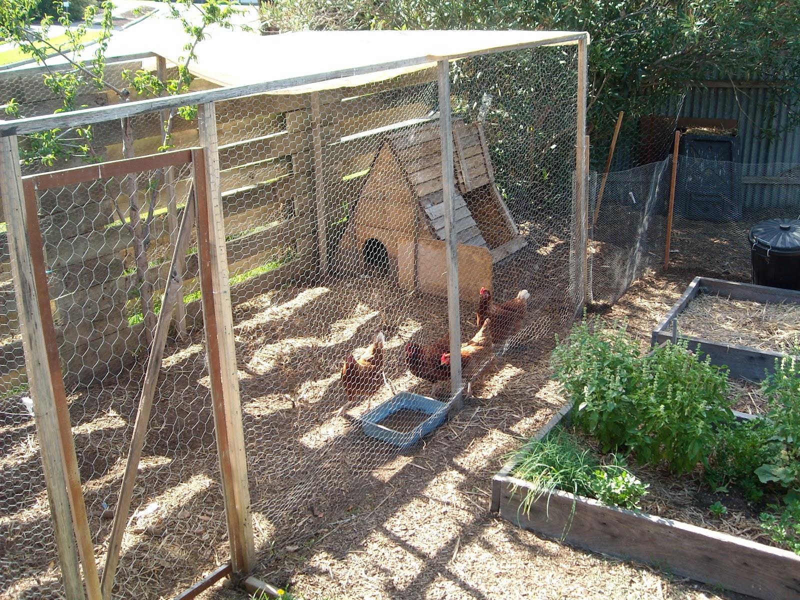 Zucchini Island Chicken Enclosure Designs Be Creative