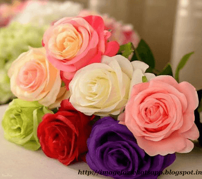 Good Morning Wishes with Roses on Whatsapp Messages
