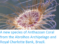 http://sciencythoughts.blogspot.co.uk/2014/07/a-new-species-of-anthazoan-coral-from.html