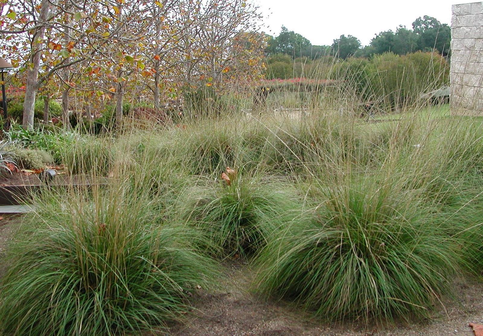 fairy yardmother landscape design muhlenbergia rigens deer grass