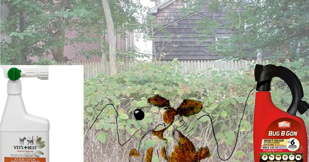 how to kill fleas in yard diy
