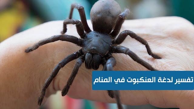 تفسير لدغة العنكبوت في المنام