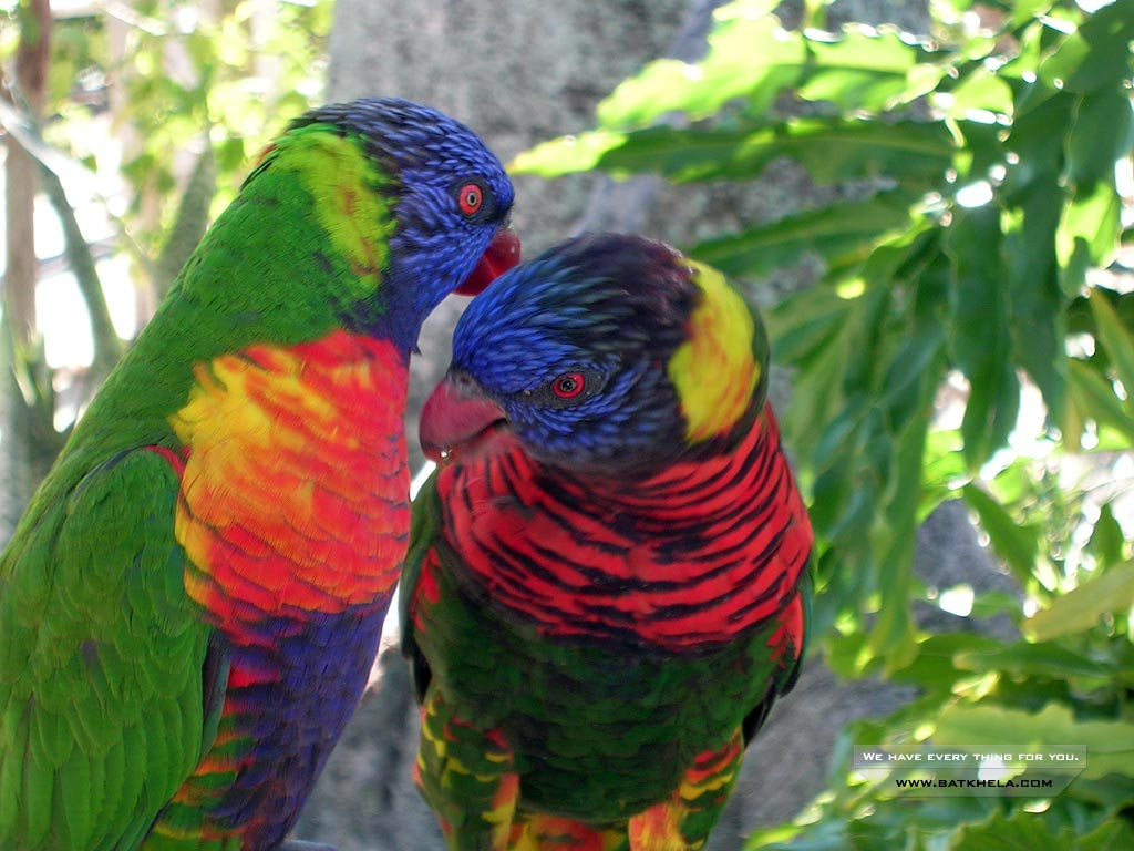 Animals Zoo Park: 12 Beautiful Birds Desktop Wallpapers Free