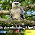 وثائقي.. كاميرا في عش أعظم صقر على الإطلاق