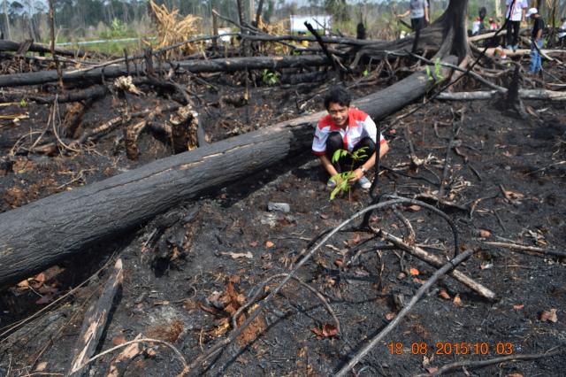 Revegetasi Kebakaran Hutan dan Lahan