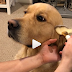 DOG MAKEUP! Η νέα τάση στα social media...