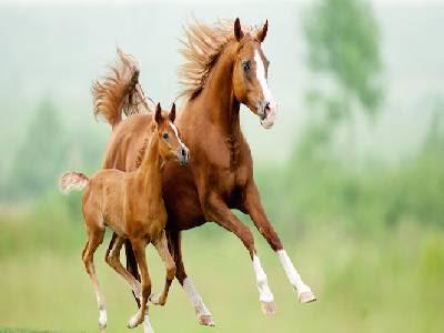 Pet Animals Name horse