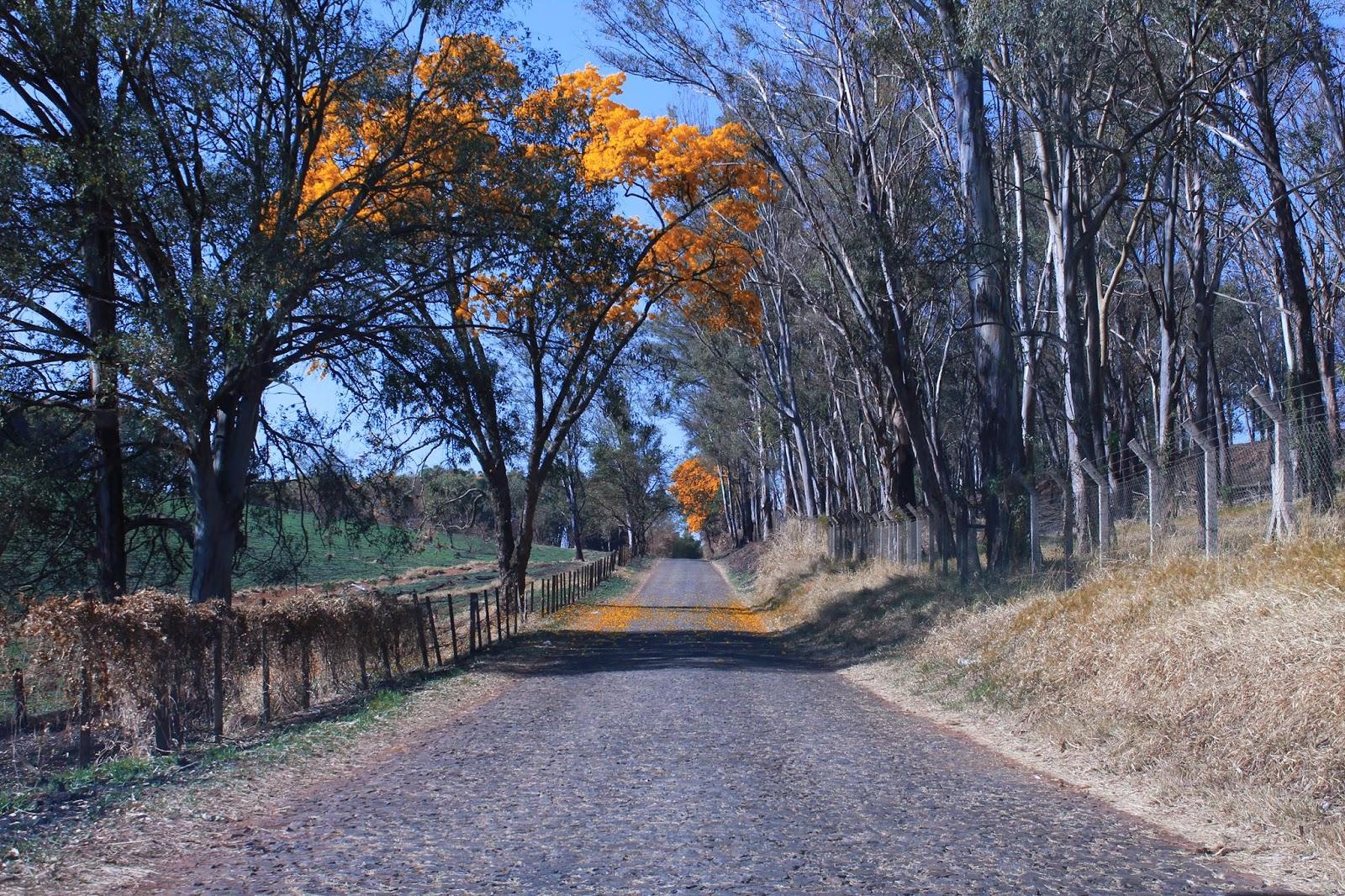 Estrada velha do Barreiro