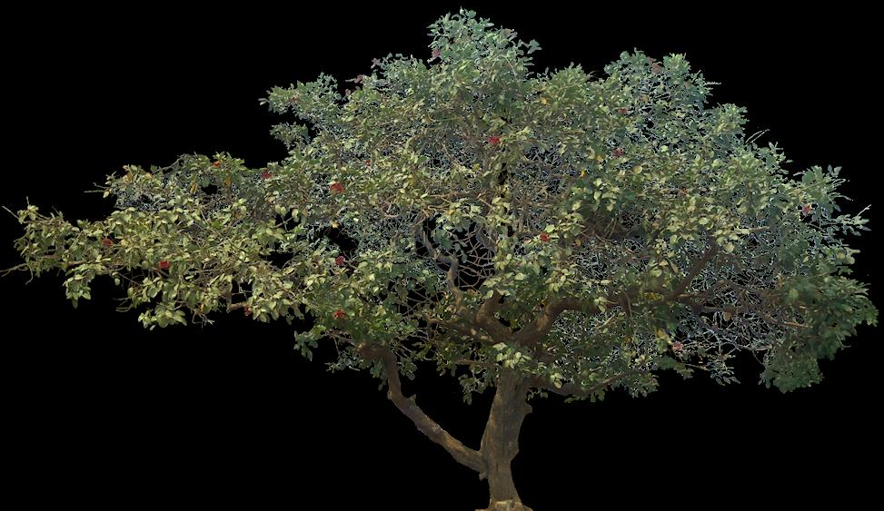 Sketsa Gambar Rumah Dan Pohon  XX Rumah