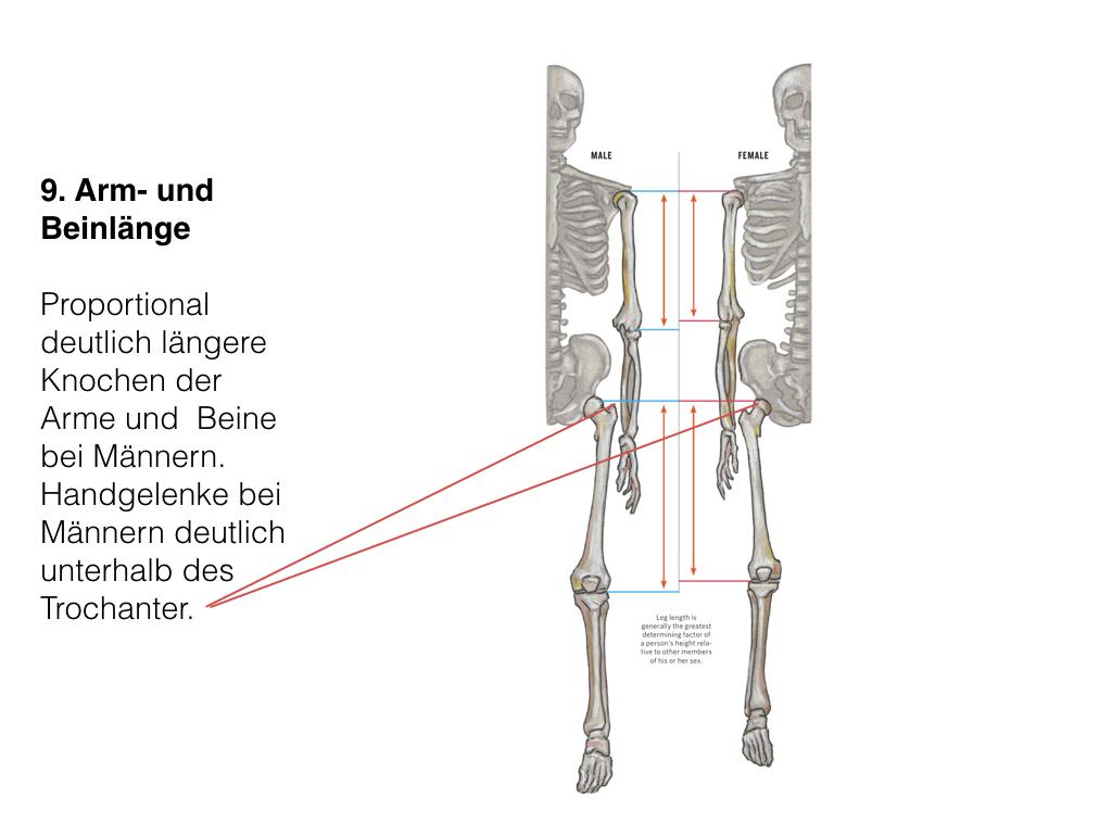 Schön Knochen Der Beine Fotos - Anatomie Und Physiologie Knochen ...