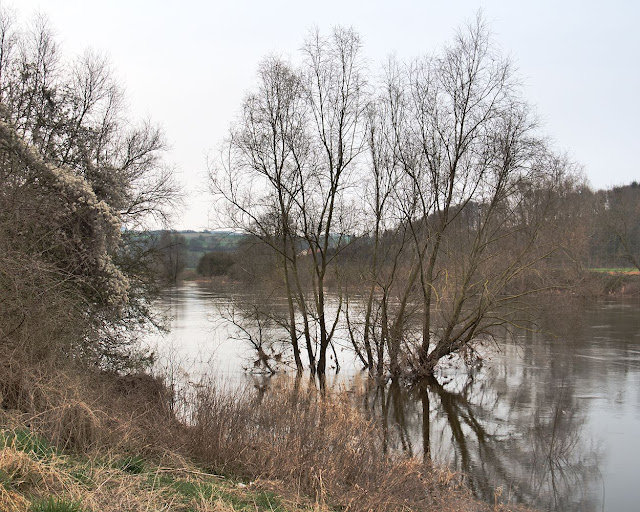 Ein Baum steht in der Weser die viel Wasser führt