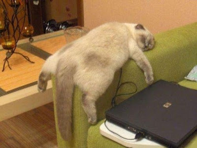 20 Relaxed Cats Who'll Feel at Home Everywhere