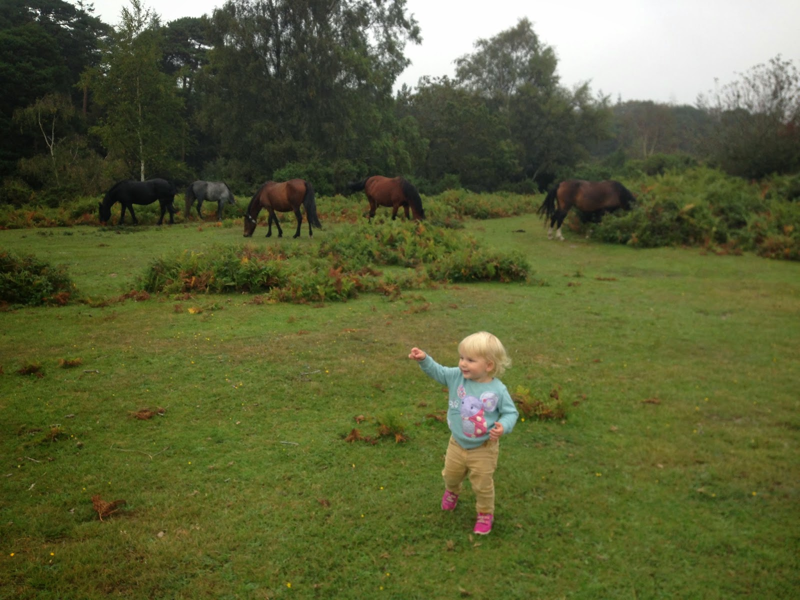 Tin Box Tot and horses in the New Forest