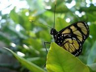 Nature Center at Wildwood Lake Sanctuary in Harrisburg