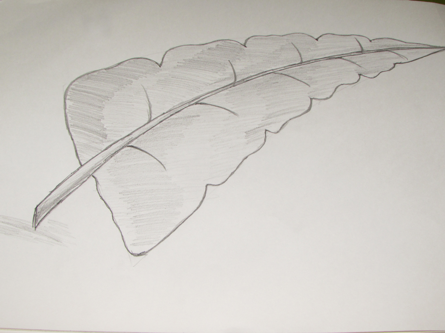 How to draw or sketch of banana leaf using pencil