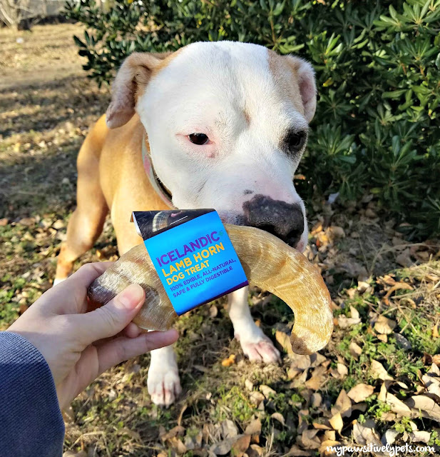 A lamb horn dog treat is considered the oldest dog treat. They've been making dogs happy since 874 A.D.!