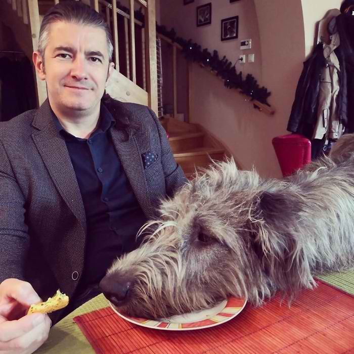 20 Hilarious Photos Of Irish Wolfhounds That Prove How Adorably Big They Are