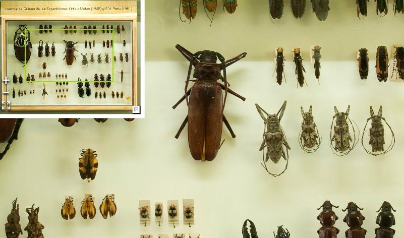 El Museo Virtual Nacional de Ciencias Naturales