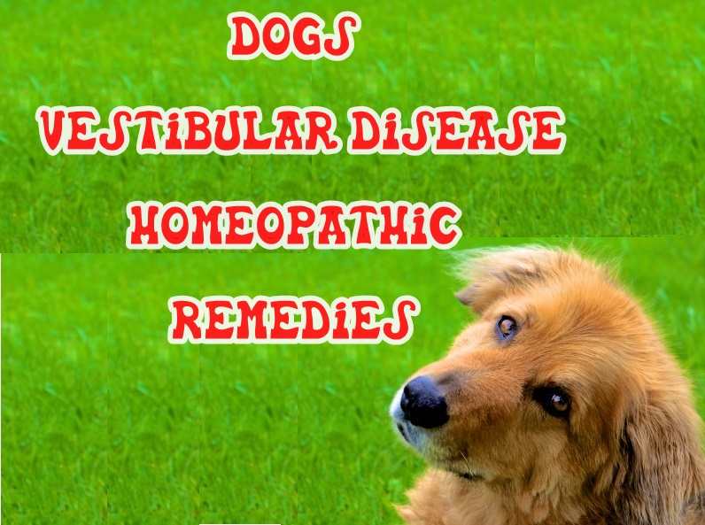 Dogs Canine Vestibular Disease Homeopathic Remedies | Homeopathic