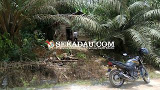 Tempat kediaman ibu lisan beserta keluarganya di Desa Nanga Pemubuh Kecamatan Sekadau Hulu Kabupaten Sekadau