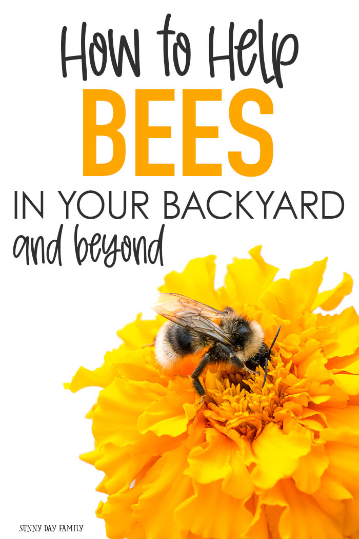 Save the bees! Bees need our help and there are simple things your family can do to help bees. Help save honeybees with these easy bee projects. #bees #beegarden #savethebees #honeybee