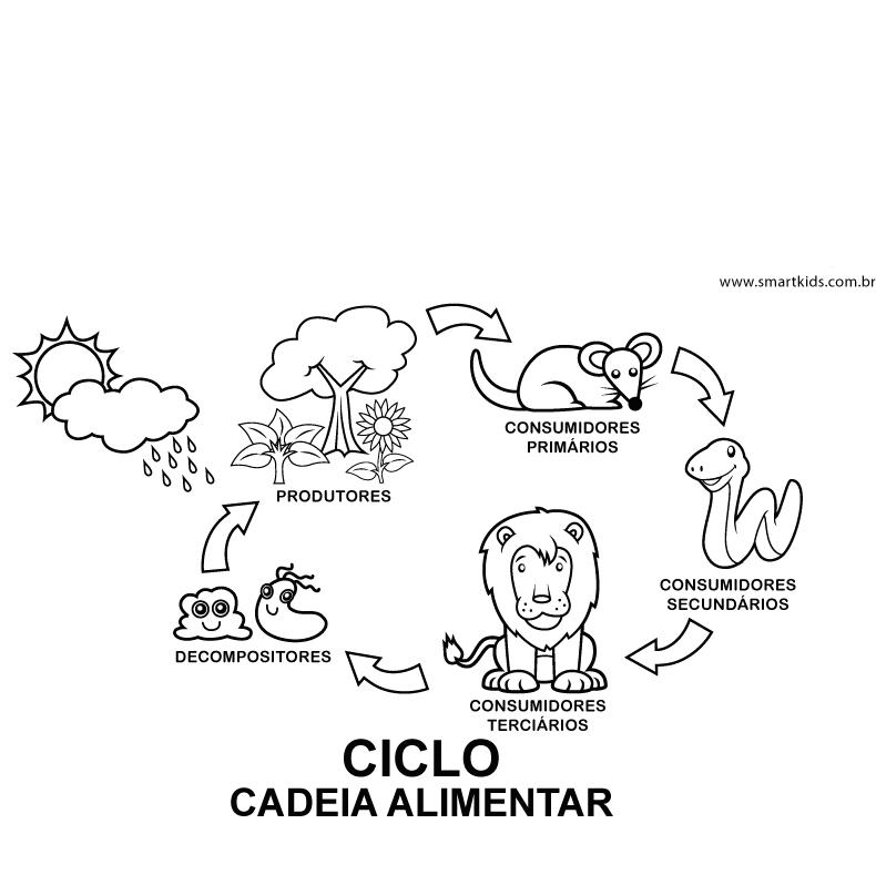 Animais Cadeia Alimentar Atividades Desenhos Colorir